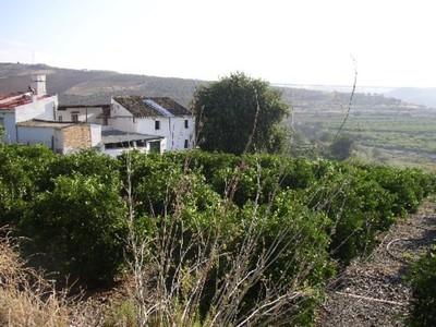 Ref:AP544 Semi Detached House For Sale in Bermejo